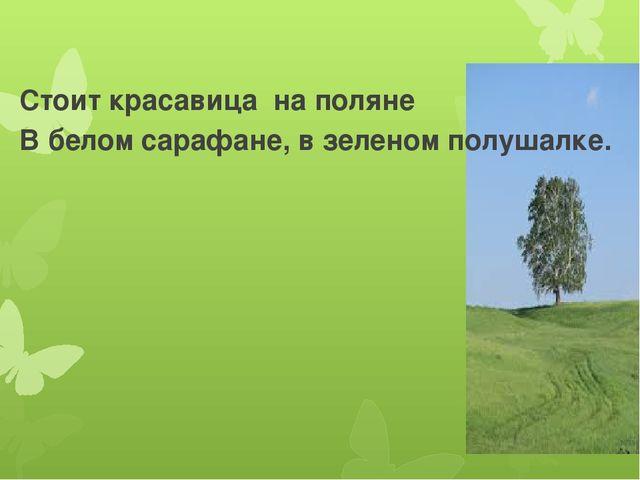 Стоит красавица на поляне В белом сарафане, в зеленом полушалке.