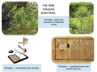 На чём писали египтяне. Папирус -тростник, росший по берегам Нила. Папирус —