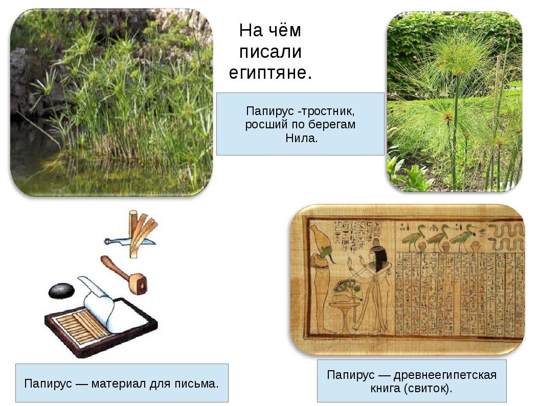 На чём писали египтяне. Папирус -тростник, росший по берегам Нила. Папирус —...