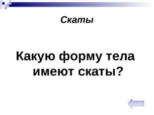 Скаты Какую форму тела имеют скаты?