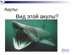 Акулы Вид этой акулы?