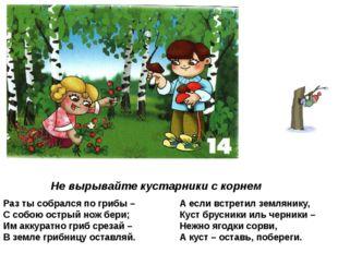 Не вырывайте кустарники с корнем Раз ты собрался по грибы – С собою острый но