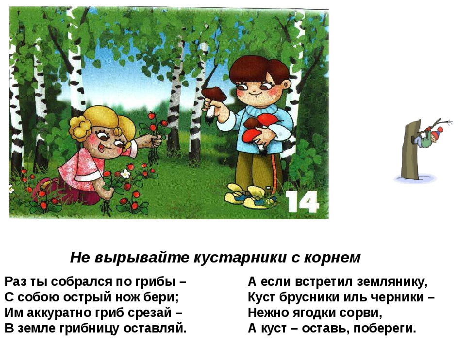 Не вырывайте кустарники с корнем Раз ты собрался по грибы – С собою острый но...