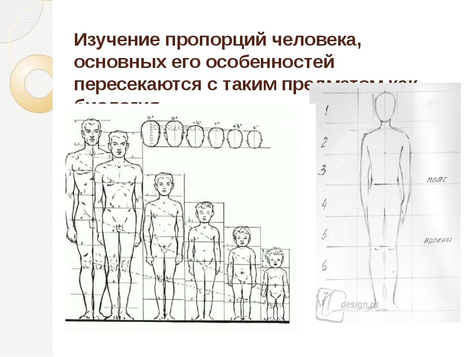 Изучение пропорций человека, основных его особенностей пересекаются с таким п...