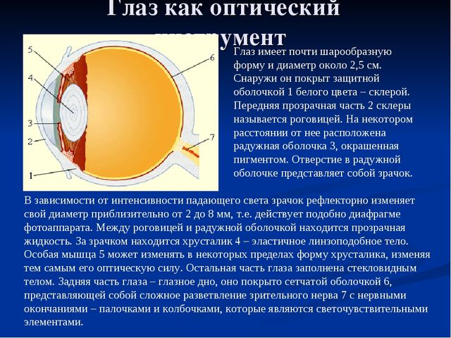 Глаз как оптический инструмент Глаз имеет почти шарообразную форму и диаметр...