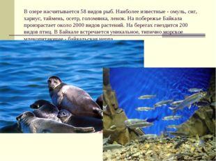 В озере насчитывается 58 видов рыб. Наиболее известные- омуль, сиг, хариус,