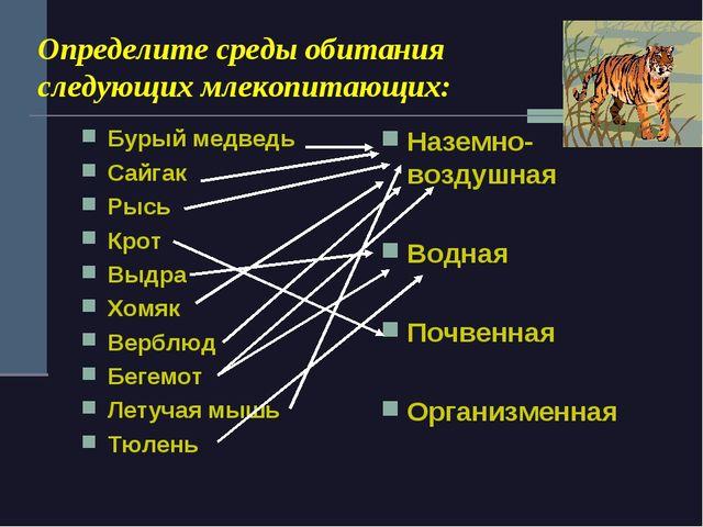 Определите среды обитания следующих млекопитающих: Бурый медведь Сайгак Рысь...