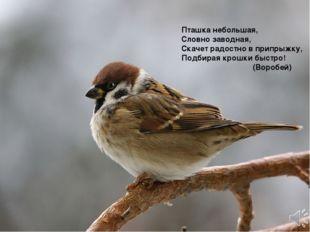 Пташка небольшая, Словно заводная, Скачет радостно в припрыжку, Подбирая кро