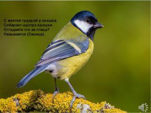 С желтой грудкой у окошка Собирает шустро крошки Отгадайте что за птица? Наз