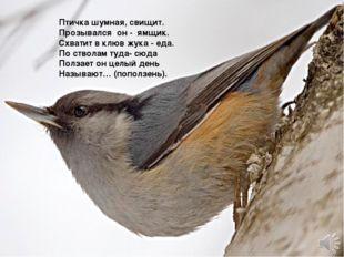 Птичка шумная, свищит. Прозывался он - ямщик. Схватит в клюв жука - еда. П