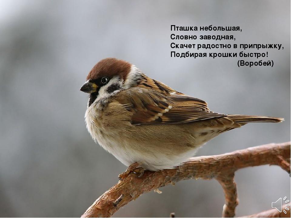Пташка небольшая, Словно заводная, Скачет радостно в припрыжку, Подбирая кро...