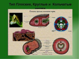 Тип Плоские, Круглые и Кольчатые черви