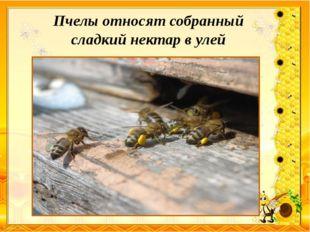 Пчелы относят собранный сладкий нектар в улей