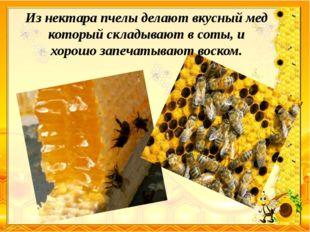 Из нектара пчелы делают вкусный мед который складывают в соты, и хорошо запеч