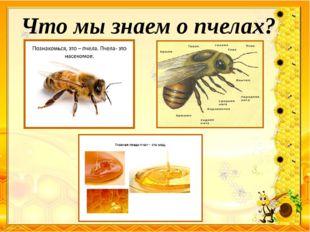 Что мы знаем о пчелах?
