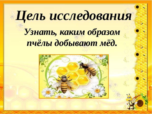 Цель исследования Узнать, каким образом пчёлы добывают мёд.