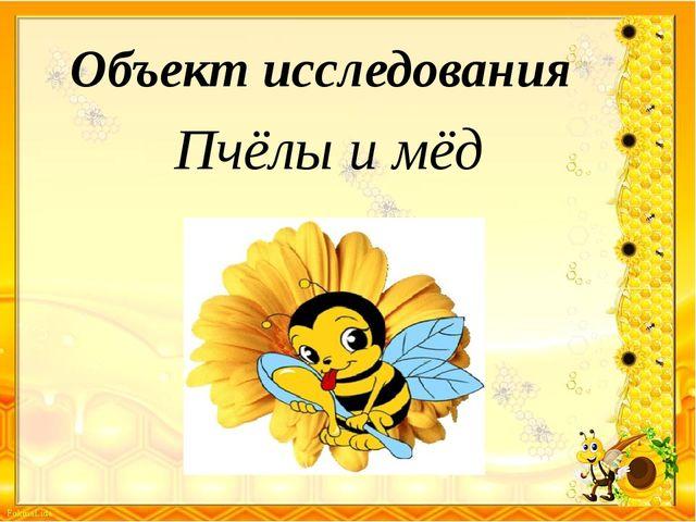 Объект исследования Пчёлы и мёд