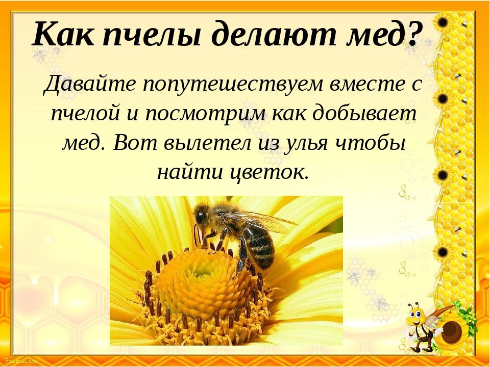 Как пчелы делают мед? Давайте попутешествуем вместе с пчелой и посмотрим как...