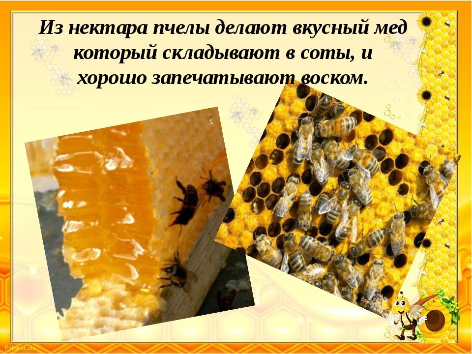 Из нектара пчелы делают вкусный мед который складывают в соты, и хорошо запеч...