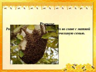 Роение . Рой – это семья пчел, образующих во главе с маткой обособленную гру