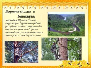 Бортничество в Башкирии заповедник Шульган-Таш на территории Бурзянского райо