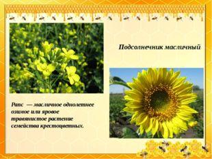 Подсолнечник масличный Рапс— масличное однолетнее озимое или яровое травяни