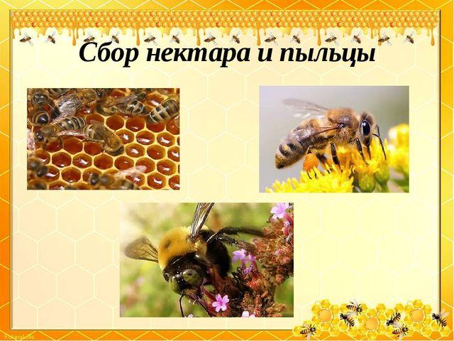 Сбор нектара и пыльцы