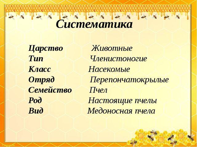 Систематика Царство Животные Тип Членистоногие Класс Насекомые Отряд Перепонч...