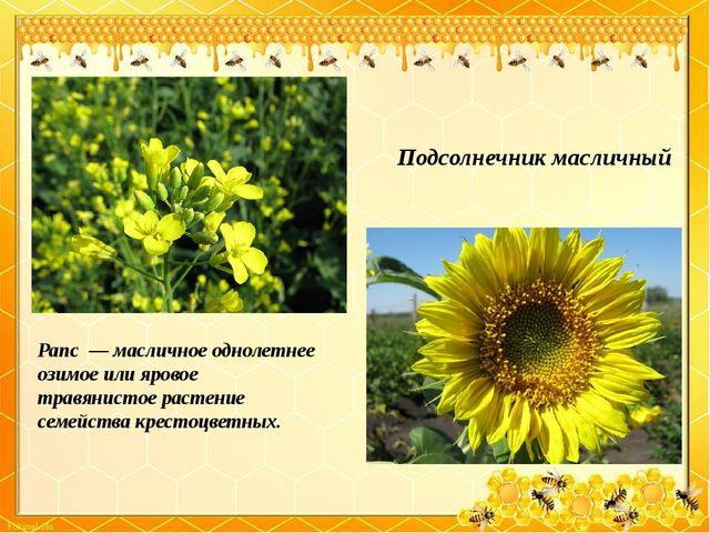 Подсолнечник масличный Рапс— масличное однолетнее озимое или яровое травяни...