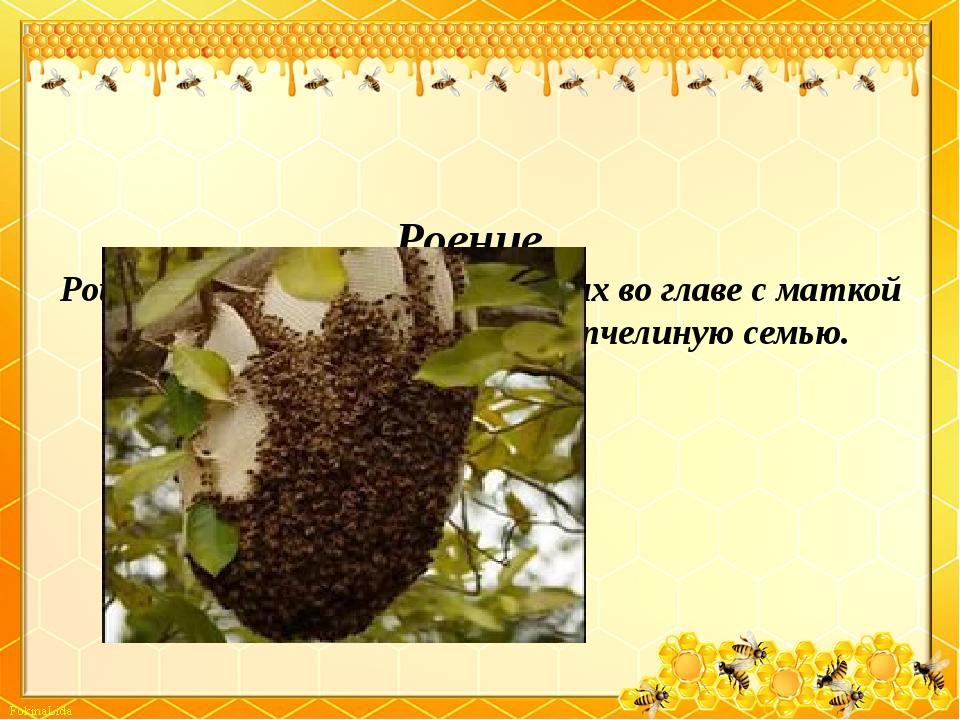 Роение . Рой – это семья пчел, образующих во главе с маткой обособленную гру...