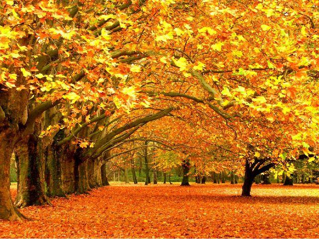 Проверка домашнего задания «Серый вечер» Почему осень называется «золотая»?