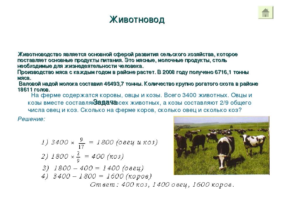Животновод На ферме содержатся коровы, овцы и козы. Всего 3400 животных. Овцы...