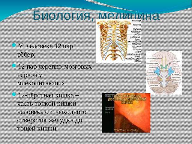 Биология, медицина У человека 12 пар рёбер; 12 пар черепно-мозговых нервов у...