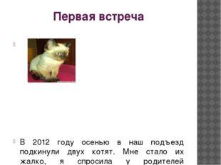 Первая встреча В 2012 году осенью в наш подъезд подкинули двух котят. Мне ста