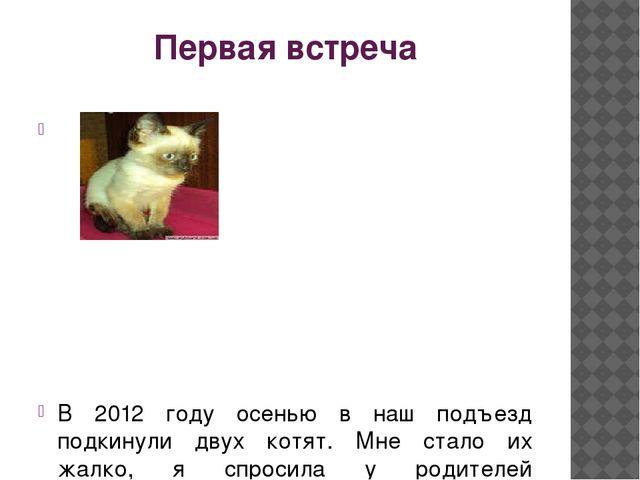 Первая встреча В 2012 году осенью в наш подъезд подкинули двух котят. Мне ста...