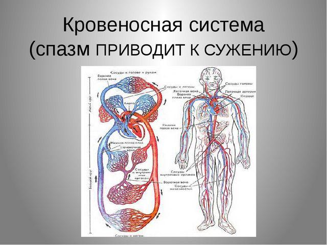 Кровеносная система (спазм ПРИВОДИТ К СУЖЕНИЮ)