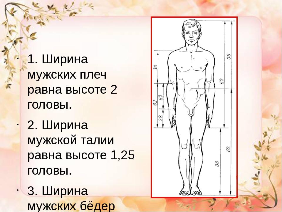1. Ширина мужских плеч равна высоте 2 головы. 2. Ширина мужской талии равна...