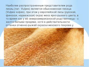 Наиболее распространенным представителем рода лисиц (лат. Vulpes) является о