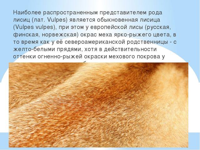 Наиболее распространенным представителем рода лисиц (лат. Vulpes) является о...