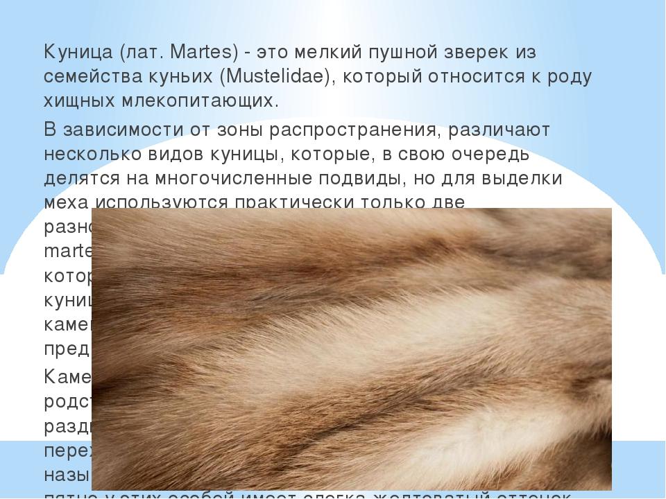 Куница (лат. Martes) - это мелкий пушной зверек из семейства куньих (Musteli...