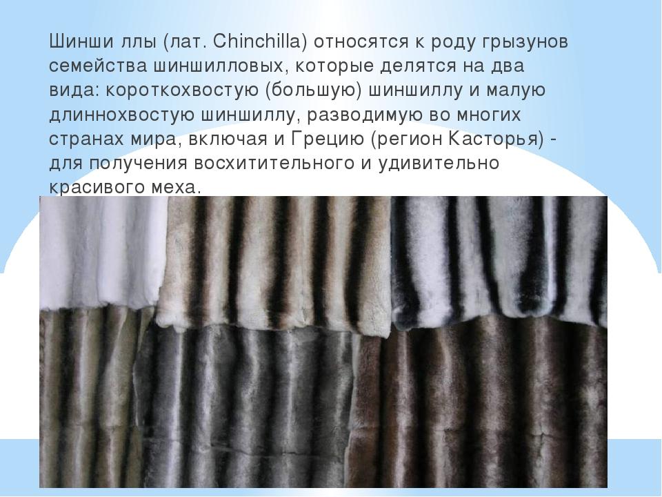 Шинши́ллы (лат. Chinchilla) относятся к роду грызунов семейства шиншилловых,...