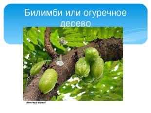 Билимби или огуречное дерево