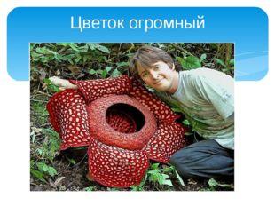 Цветок огромный