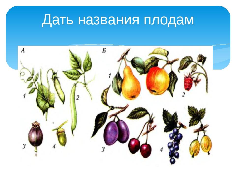Дать названия плодам