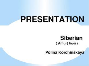 PRESENTATION Siberian ( Amur) tigers Polinа Korchinskаyа