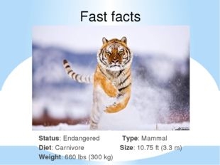 Fast facts Status: Endangered Type: Mammal Diet: Carnivore Size: 10.75 ft (3.