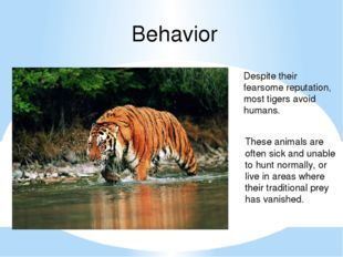 Behavior Despite their fearsome reputation, most tigers avoid humans. These a