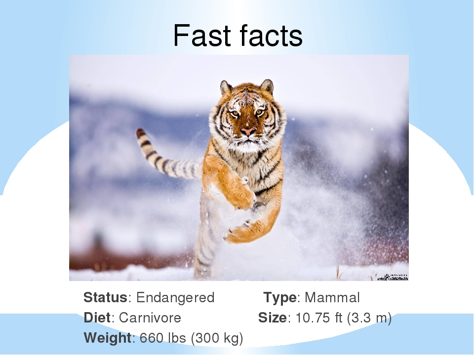 Fast facts Status: Endangered Type: Mammal Diet: Carnivore Size: 10.75 ft (3....