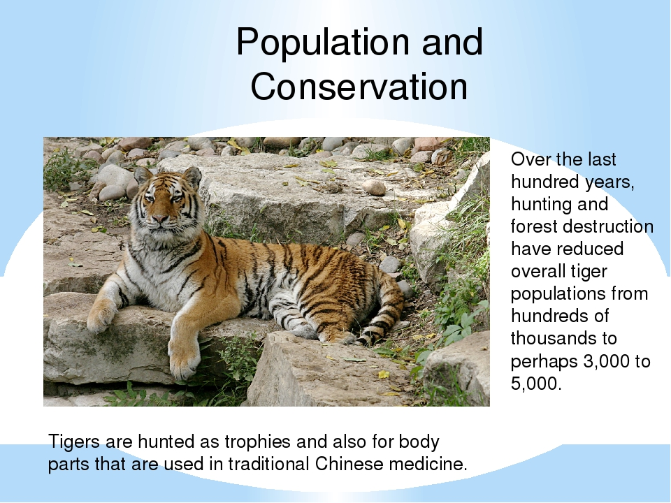 Population and Conservation Over the last hundred years, hunting and forest d...