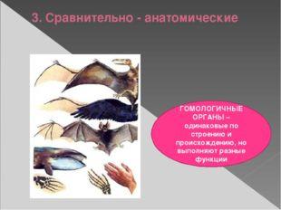 3. Сравнительно - анатомические ГОМОЛОГИЧНЫЕ ОРГАНЫ – одинаковые по строению